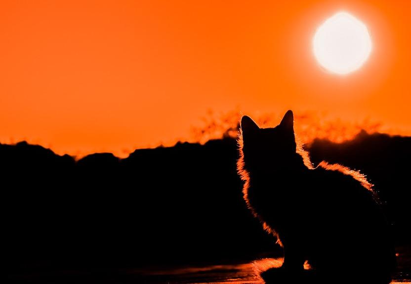 Koťátko a jeho kamarádi preview image